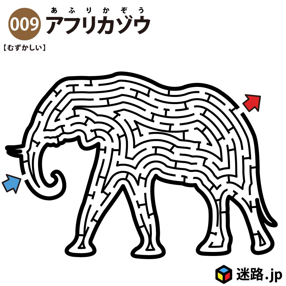 【迷路】アフリカゾウ(難しい)