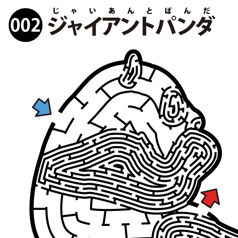 【迷路】ジャイアントパンダ アイキャッチ