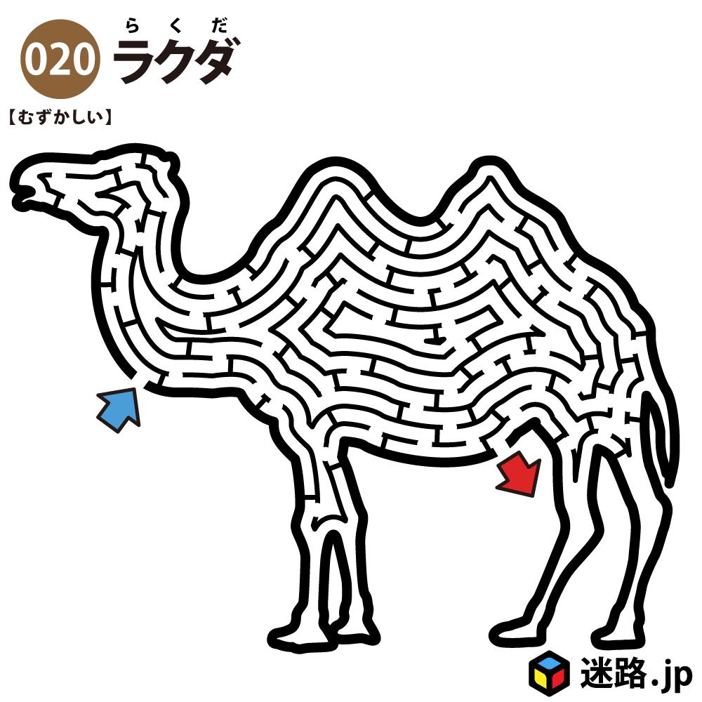 【迷路】ラクダ(難しい)
