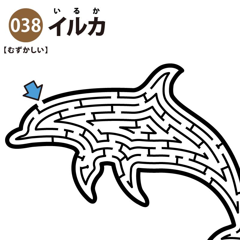 イルカの難しい迷路 アイキャッチ
