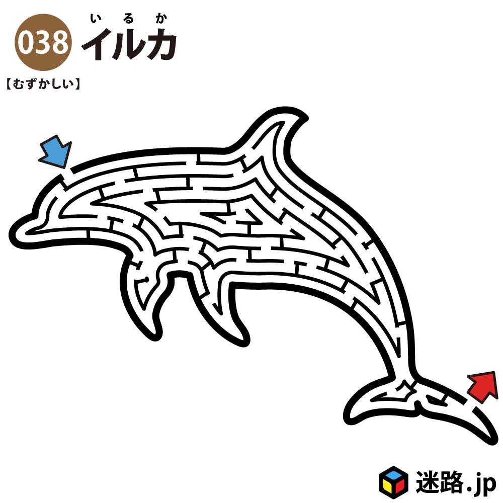 イルカの難しい迷路